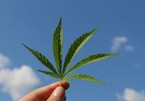 hemp-leaf-3661209_640